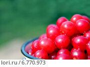 Купить «Спелая вишня в металлическом бидончике», фото № 6770973, снято 4 августа 2013 г. (c) Евгений Ткачёв / Фотобанк Лори