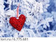 Красное сердце, висит на заснеженных ветвях. Стоковое фото, фотограф Оксюта Виктор / Фотобанк Лори