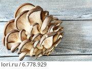 Купить «Грибы-вешенки на деревянной поверхности», фото № 6778929, снято 3 октября 2014 г. (c) Афанасьева Ольга / Фотобанк Лори