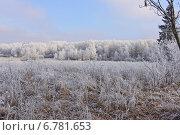 Осеннее утро. Стоковое фото, фотограф Юрий Василенко / Фотобанк Лори