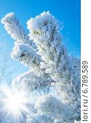 Купить «Ветка в инее на фоне неба», фото № 6789589, снято 14 февраля 2014 г. (c) Икан Леонид / Фотобанк Лори