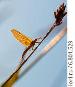 Купить «Маленькая бабочка сидит на сухой траве освещённая лучами заходящего солнца», эксклюзивное фото № 6801529, снято 7 июля 2014 г. (c) Игорь Низов / Фотобанк Лори