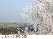 Береза в инее. Стоковое фото, фотограф Екатерина Бычкова / Фотобанк Лори
