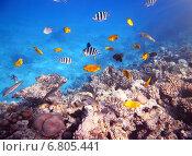 Купить «Кораллы и рыбы в Красном море», фото № 6805441, снято 3 декабря 2014 г. (c) Михаил Коханчиков / Фотобанк Лори