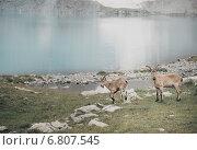 Купить «Горные туры на фоне озера Безмолвия», фото № 6807545, снято 23 марта 2019 г. (c) Елена Корнеева / Фотобанк Лори