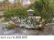 Купить «Японский сад Главного ботанического сада в Москве. Декоративный островок с каменным фонарём и низкорослой сосной на декоративном пруду», фото № 6808805, снято 1 ноября 2009 г. (c) Горшков Игорь / Фотобанк Лори