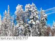 Купить «Зимний лес с заснеженными деревьями на фоне голубого неба», фото № 6810717, снято 2 февраля 2014 г. (c) Евгений Ткачёв / Фотобанк Лори