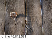 Опавший лист на досках покрытые инеем. Стоковое фото, фотограф Екатерина Ярославовна Мостовая / Фотобанк Лори