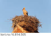 Rühstädt, Germany, a stork in its nest on a ridge. Стоковое фото, агентство Caro Photoagency / Фотобанк Лори