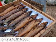 Купить «Копченая рыбка домашнего приготовления, пойманная на озере Селигер Тверской области», эксклюзивное фото № 6816505, снято 3 сентября 2011 г. (c) lana1501 / Фотобанк Лори