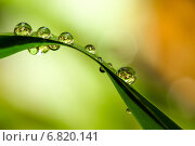 Купить «Макро капли дождя на траве после ливня», фото № 6820141, снято 5 октября 2011 г. (c) Tatiana Tetereva / Фотобанк Лори