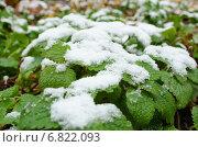 Снег на листьях зелёной травы. Стоковое фото, фотограф Дмитрий / Фотобанк Лори