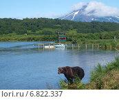 Медведь на фоне Ильинской сопки. Редакционное фото, фотограф Анна Никольская / Фотобанк Лори