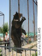 Купить «Бурый медведь стоит в полный рост в углу клетки», эксклюзивное фото № 6828445, снято 16 августа 2013 г. (c) Щеголева Ольга / Фотобанк Лори