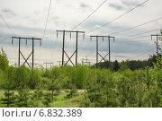 Купить «Линии электропередач (ЛЭП) на деревянных опорах», фото № 6832389, снято 14 мая 2014 г. (c) Александр Романов / Фотобанк Лори