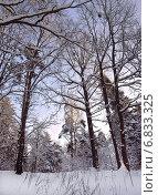 Купить «Морозный день в зимнем лесу», фото № 6833325, снято 1 января 2010 г. (c) Самойлова Екатерина / Фотобанк Лори