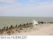 Чайка над волной. Стоковое фото, фотограф Андрей Силивончик / Фотобанк Лори