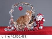 Кошка в корзинке смотрит на шарик. Стоковое фото, фотограф Елена Беззубцева / Фотобанк Лори