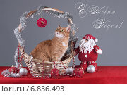 Кошка в корзинке. Стоковое фото, фотограф Елена Беззубцева / Фотобанк Лори