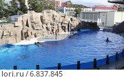 Купить «Шоу дельфинов в дельфинарии», видеоролик № 6837845, снято 21 сентября 2019 г. (c) Евгений Ткачёв / Фотобанк Лори