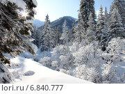 Зимний лес в инее. Стоковое фото, фотограф Попов Роман / Фотобанк Лори