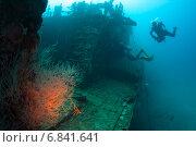 Купить «Водолазы обследуют обросшее кораллами затонувшее судно», фото № 6841641, снято 11 февраля 2013 г. (c) Сергей Дубров / Фотобанк Лори