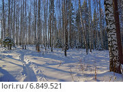 Берёзовая роща после снегопада. Стоковое фото, фотограф Ирина Черкашина / Фотобанк Лори