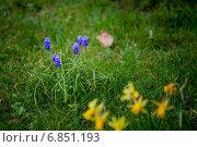 Весна. Стоковое фото, фотограф Volkova Natalia / Фотобанк Лори