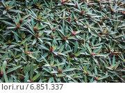 Ковер из растений. Стоковое фото, фотограф Volkova Natalia / Фотобанк Лори