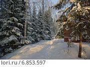 Тропинка в еловом лесу и домик. Стоковое фото, фотограф Ирина Черкашина / Фотобанк Лори