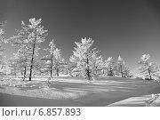 Купить «После снегопада в тайге. Дальний Восток», эксклюзивное фото № 6857893, снято 1 января 2015 г. (c) Валерий Акулич / Фотобанк Лори