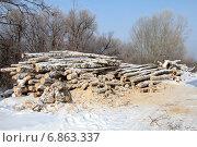 Купить «Спиленные деревья берёзы зимой», фото № 6863337, снято 5 марта 2014 г. (c) Марина Орлова / Фотобанк Лори
