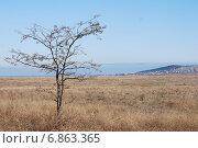 Одинокое дерево в поле. Стоковое фото, фотограф Maria Drabkina / Фотобанк Лори