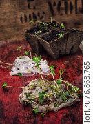 Купить «Пророщенные семена в марле и торфяные горшки», фото № 6863765, снято 4 января 2015 г. (c) Николай Лунев / Фотобанк Лори