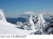 Заснеженные елки на горе Олимпус, Тродос, Кипр в январе на фоне гор и голубого неба в ясный солнечный день (2012 год). Стоковое фото, фотограф Алтанова Елена / Фотобанк Лори