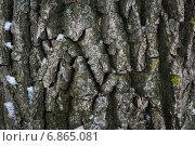 Текстура коры дерева. Стоковое фото, фотограф Андрей Семин / Фотобанк Лори