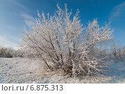 Одинокий куст в снегу. Стоковое фото, фотограф Андрей Соколов / Фотобанк Лори