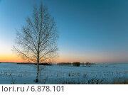Одинокая береза растущая в поле в Тульской области. Стоковое фото, фотограф Валерий Боярский / Фотобанк Лори