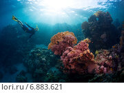 Купить «Фридайвер на фоне ярких кораллов в тропическом море», фото № 6883621, снято 8 октября 2014 г. (c) Михаил Дударев / Фотобанк Лори