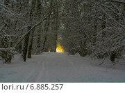 Зимний, вечерний лес. Стоковое фото, фотограф Сергей Кочевых / Фотобанк Лори