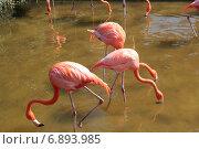 Розовый фламинго. Стоковое фото, фотограф Алексей Мальцев / Фотобанк Лори