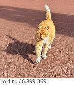 Купить «Рыжий кот и его тень», фото № 6899369, снято 17 августа 2014 г. (c) Валерия Попова / Фотобанк Лори