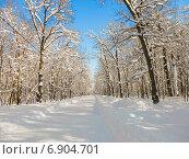 Купить «Тропа здоровья в городе Пензе солнечным днем зимой», фото № 6904701, снято 26 января 2014 г. (c) Григорий Белоногов / Фотобанк Лори