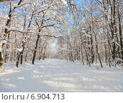 Купить «Тропа здоровья в городе Пензе солнечным зимним морозным днем», фото № 6904713, снято 26 января 2014 г. (c) Григорий Белоногов / Фотобанк Лори