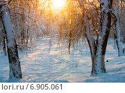 Зимний пейзаж в парке. Стоковое фото, фотограф Давид Арутюнов / Фотобанк Лори