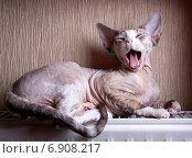 Зевающий котёнок греется на отопительной батарее. Стоковое фото, фотограф V.Ivantsov / Фотобанк Лори
