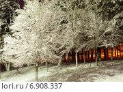 Заснеженное дерево в парке вечером. Стоковое фото, фотограф Давид Арутюнов / Фотобанк Лори