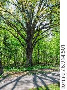 Купить «Липа и её тень в весеннем саду», фото № 6914501, снято 12 мая 2014 г. (c) Алёшина Оксана / Фотобанк Лори
