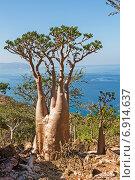 Бутылочное дерево. Стоковое фото, фотограф Вадим Козуренко / Фотобанк Лори