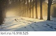 Купить «Туман и солнечные лучи среди деревьев», фото № 6918525, снято 21 января 2015 г. (c) александр жарников / Фотобанк Лори